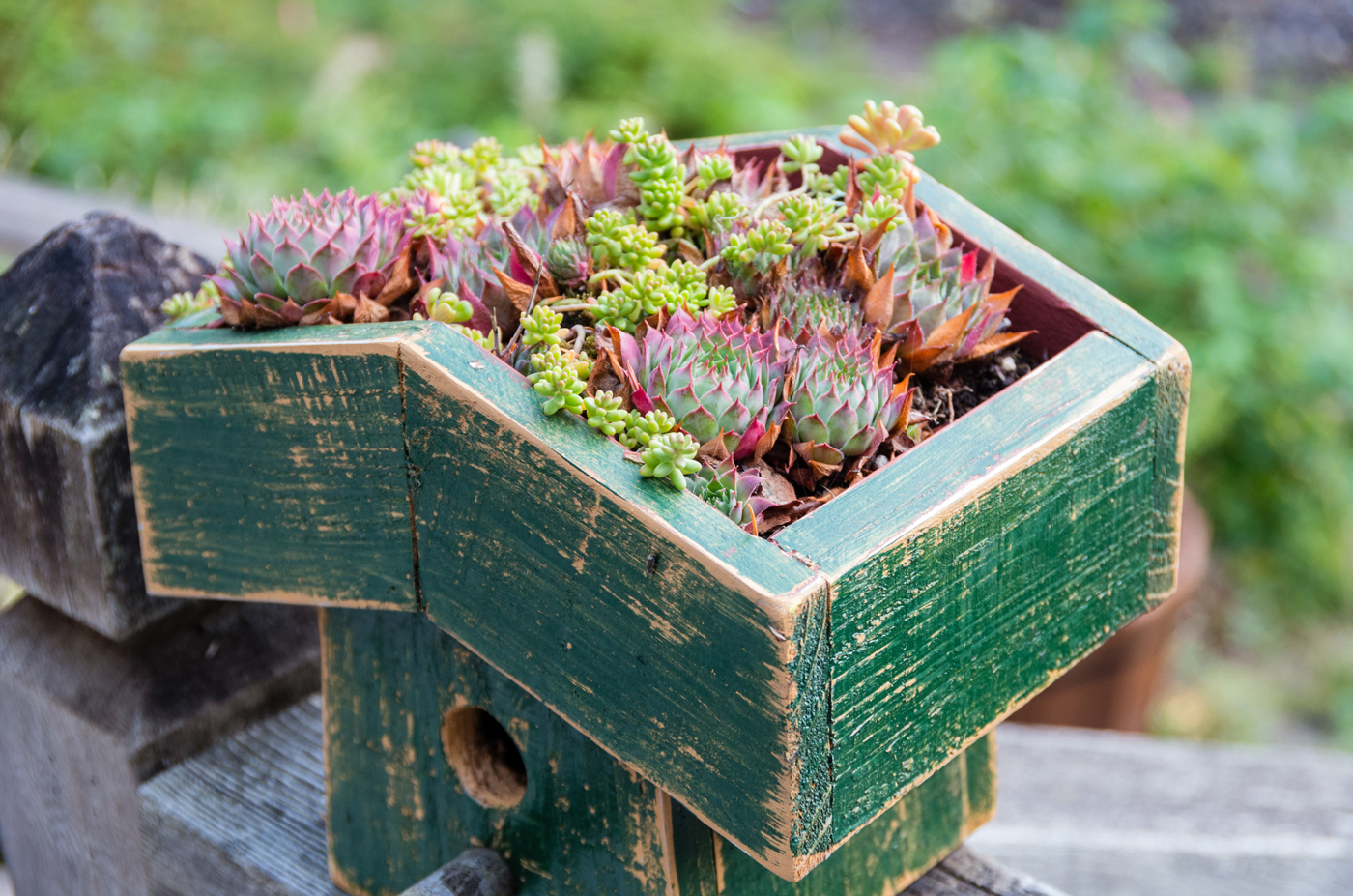 mini green roof
