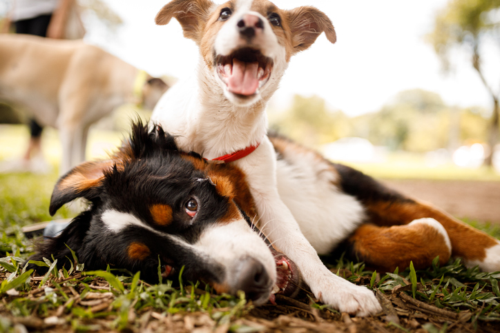 Image of Pet Day Care and Boarding Options in San Francisco