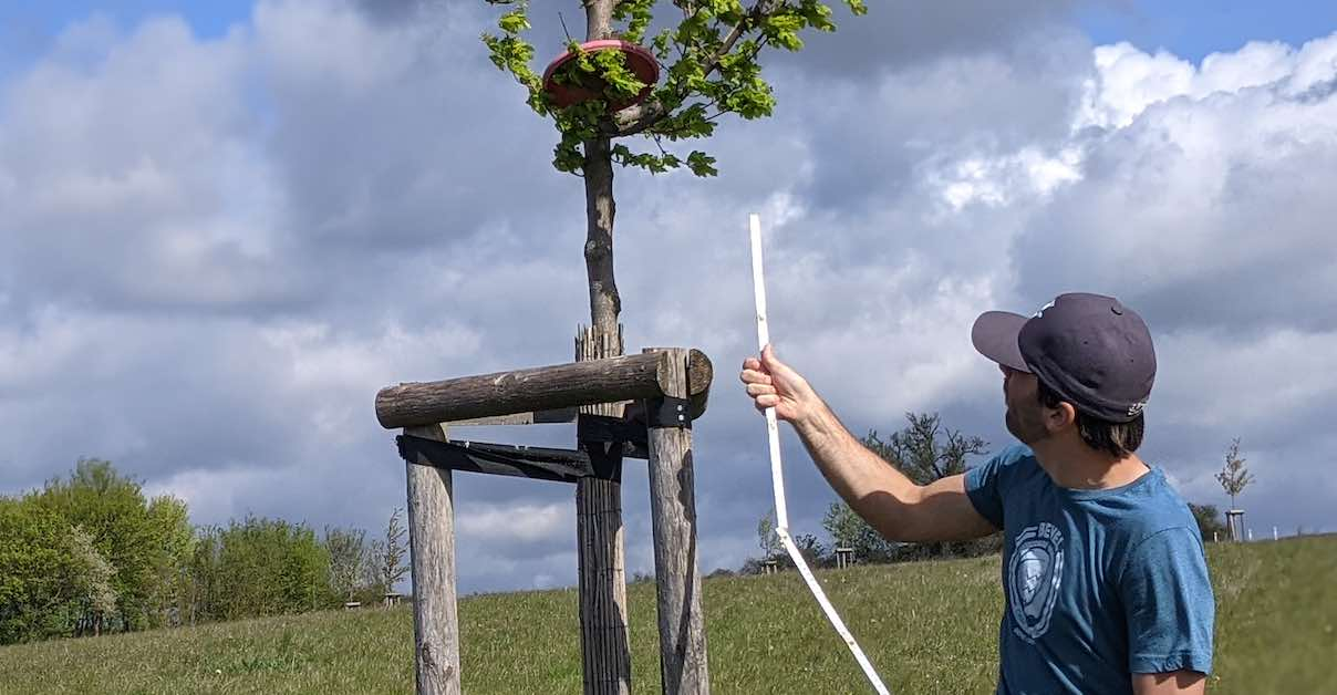 A man in a ball cap holds a measuring stick near a disc in a small tree
