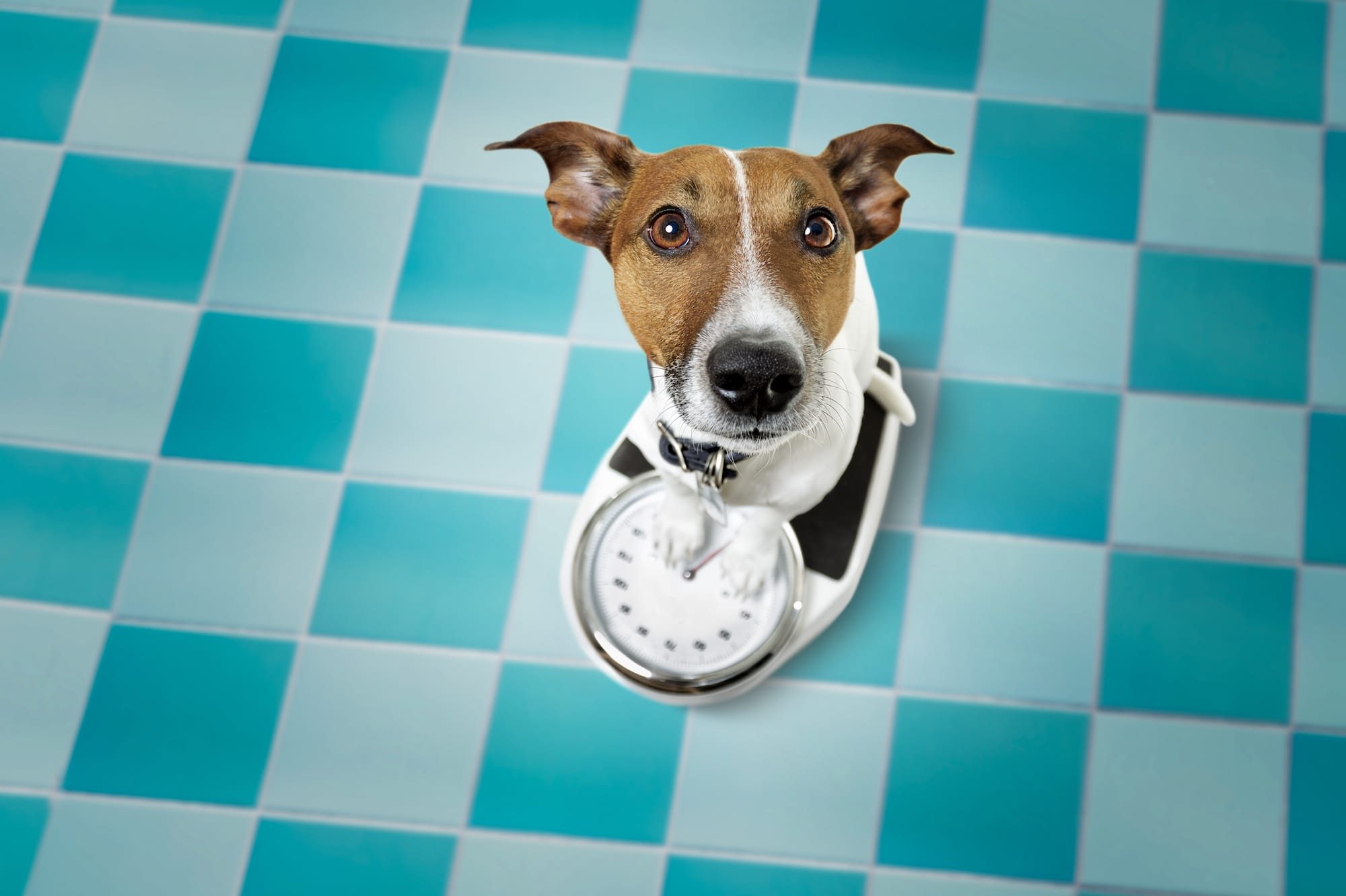 5 tips on how to help your dog lose weight
