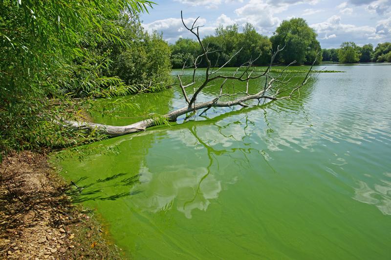 nutrient-runoff-cyanobacteria