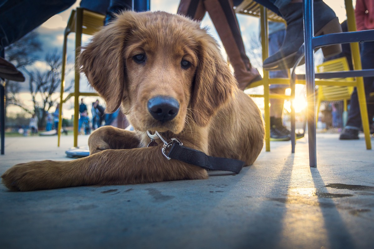 Image of The Best Dog-Friendly Restaurants and Bars in Tampa Bay