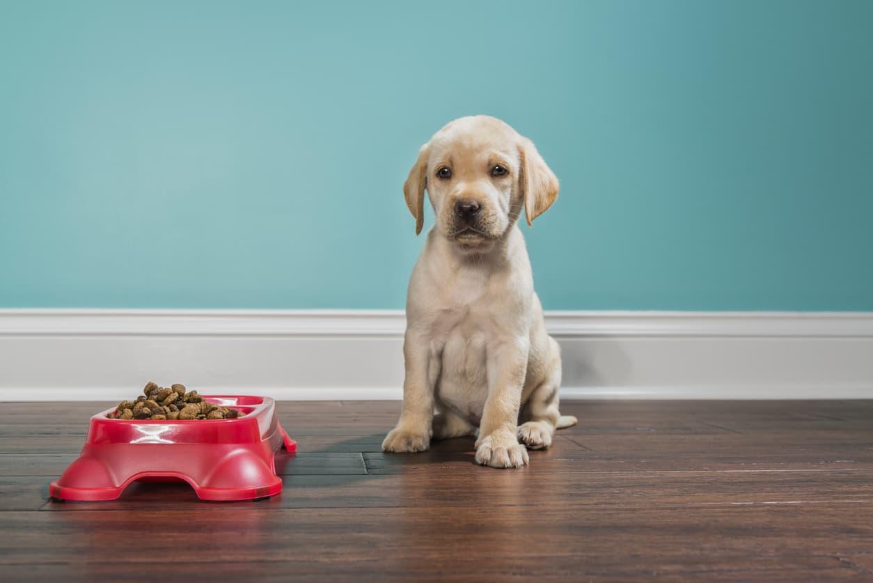 puppy-not-eating.jpg
