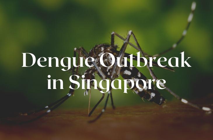 Dengue Outbreak in Singapore