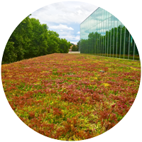 extensive green roof with Sedum mat blanket at glass curtain wall and treeline in Washington State