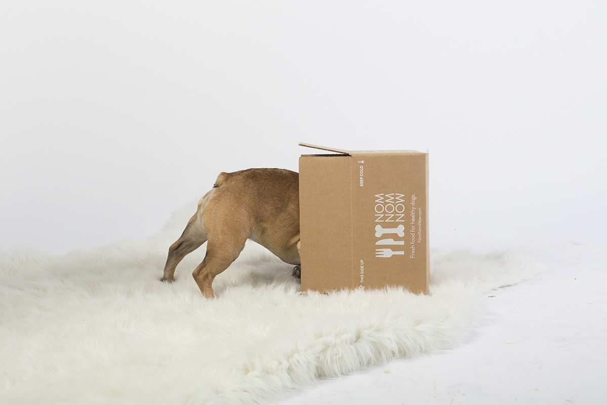 Dog Food Purchasing, Storing, Serving, Safety & Palatability