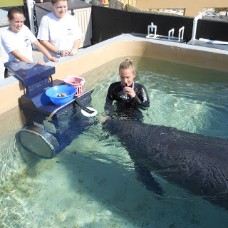 Hugh & Buffet Work & Play in their Endless Pool