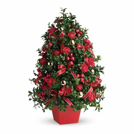 Red berry mini live Christmas tree deliveries