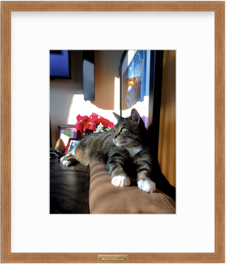 framed photo of cat on a couch