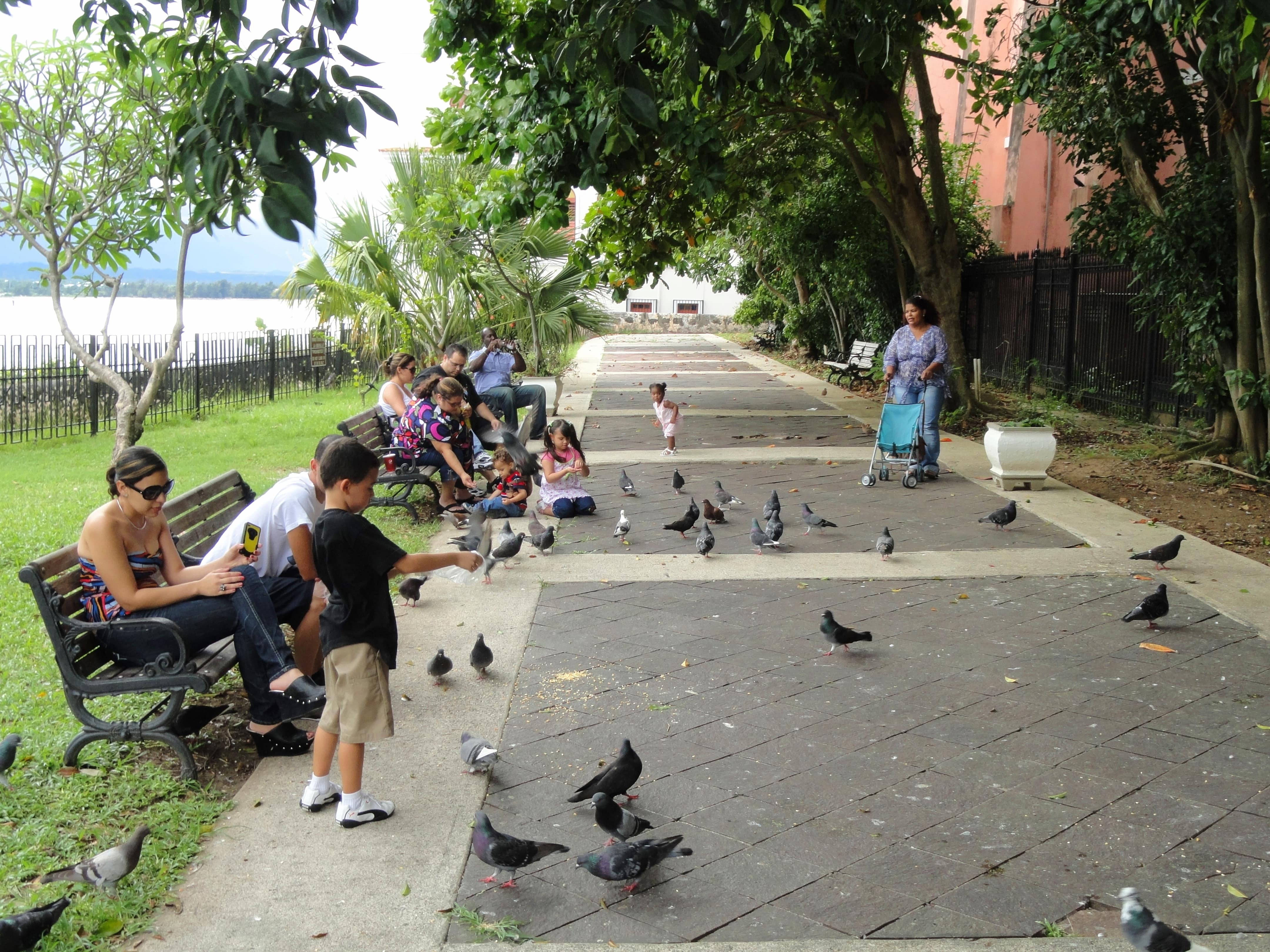 Parque Las Palomas aka Pigeon Park is one of the fun things to do in san juan puerto rico