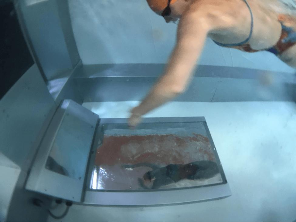 SwimBox swim studio co-owner Lissa Latella swimming in the Performance Endless Pool with underwater swim mirrors