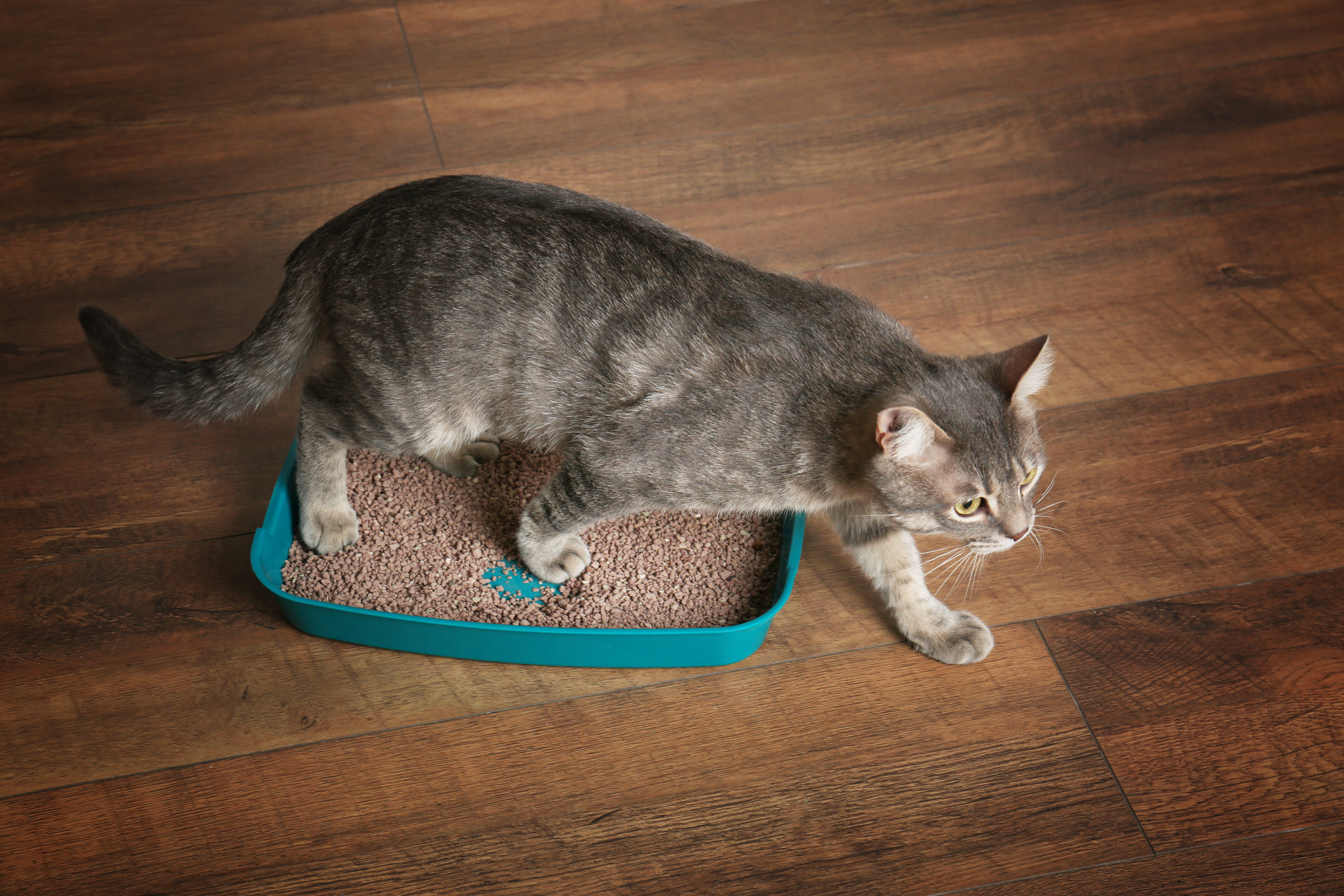 What Is Your Cat's Poo Telling You? - NomNomNow