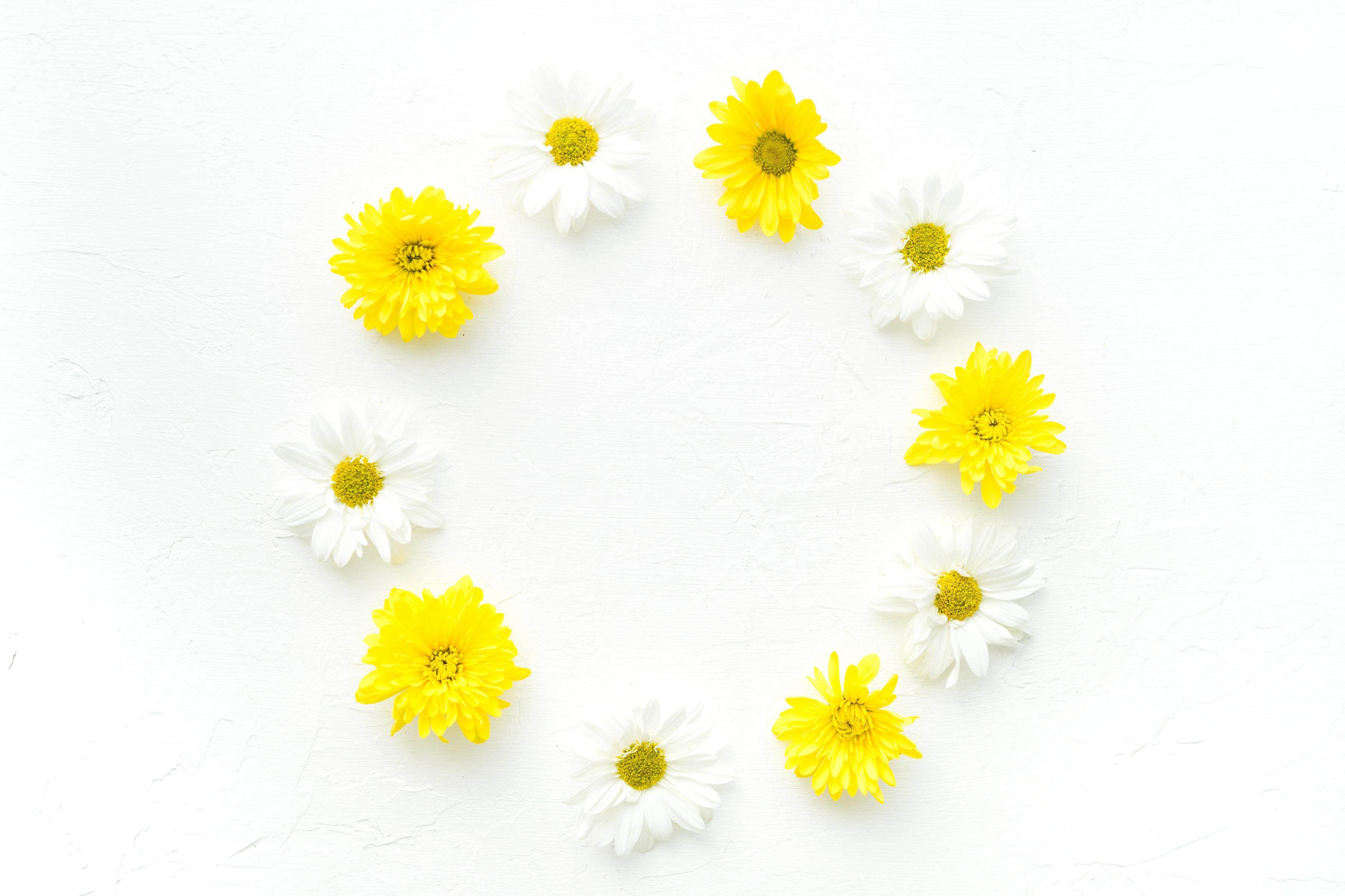 White and Yellow Daisy Wallpaper.jpg