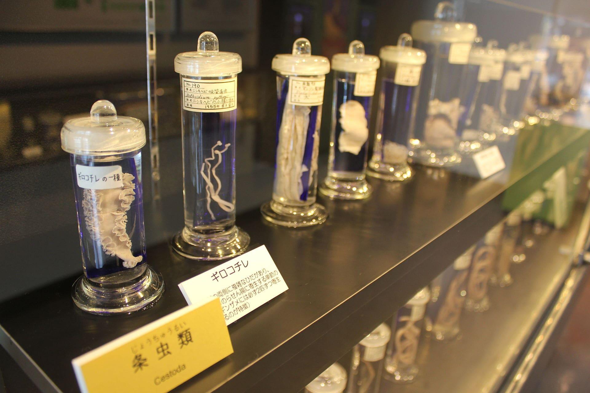 Meguro Parasitological Museum in Tokyo Japan