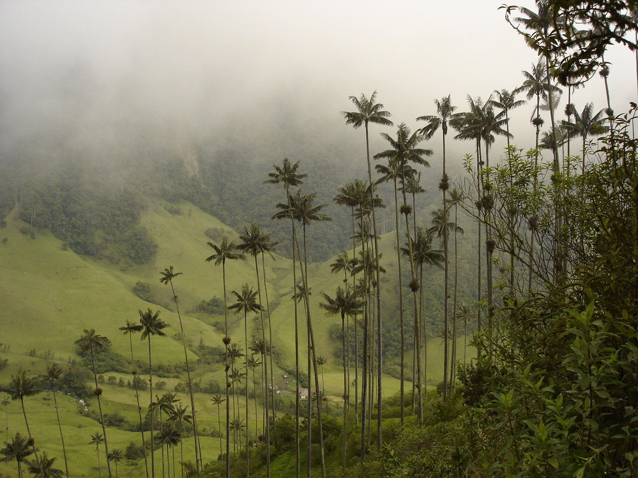 The Cocora Valley hiking Colombia
