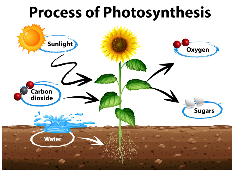 green roof soil and photosynthesis