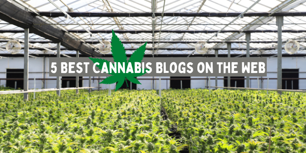 5 Best Cannabis Blogs on the Web
