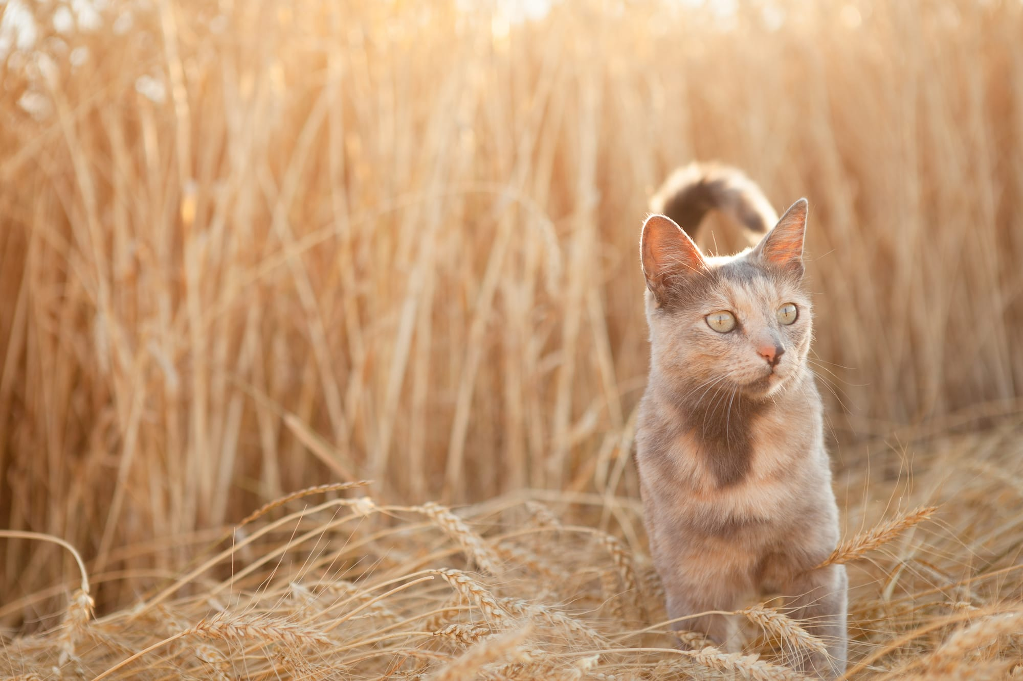 Grain Free Cat Food