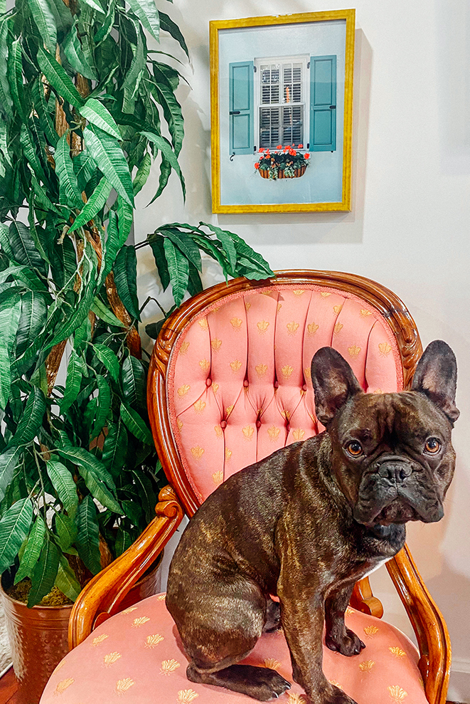 photo of yellow frame with dog
