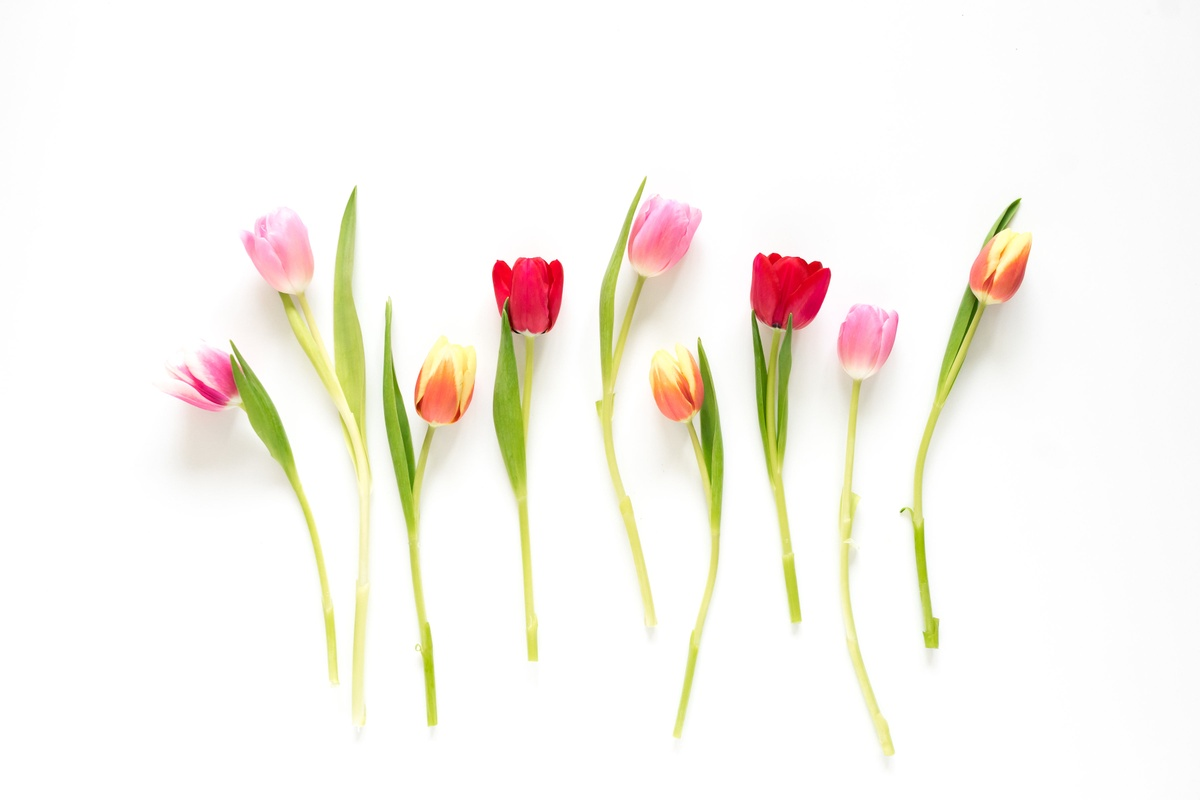 What is the meaning of Tulips?