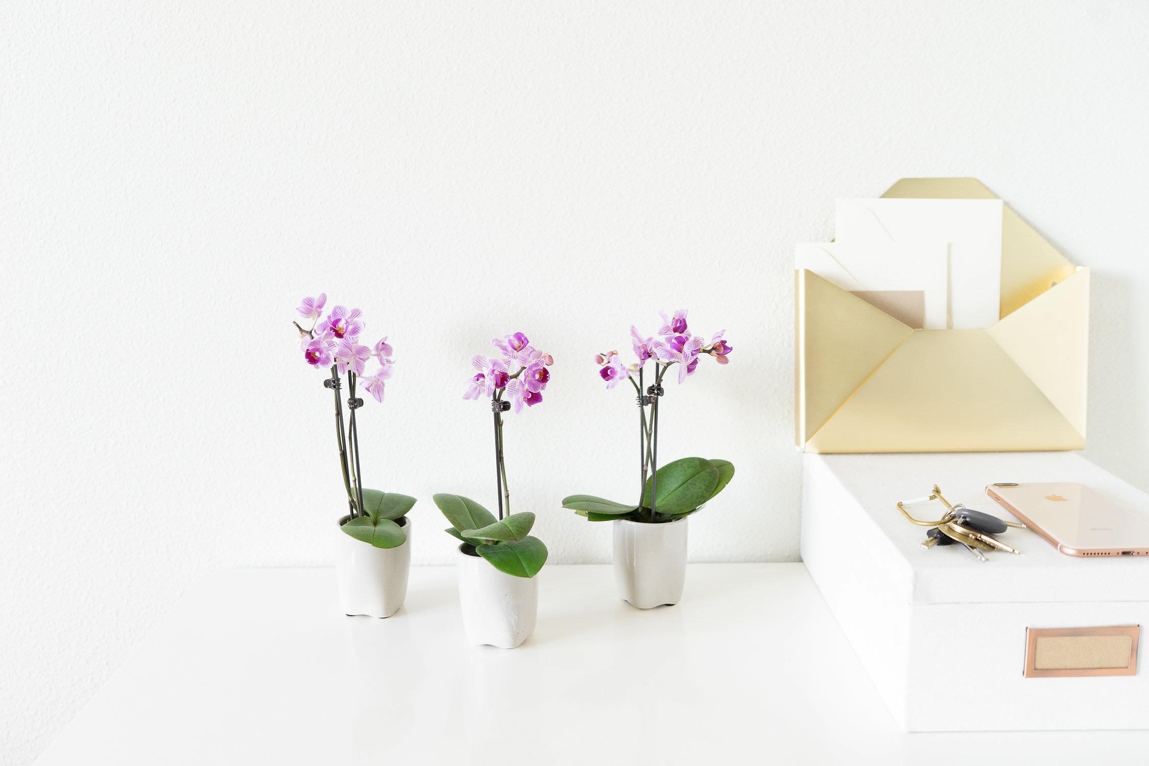Orchids for valentine's daya.jpg
