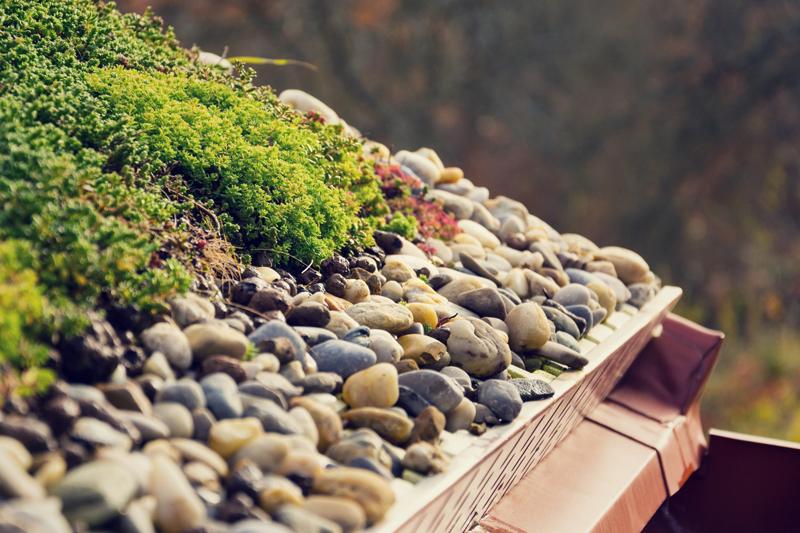 green roof soil media on living roof