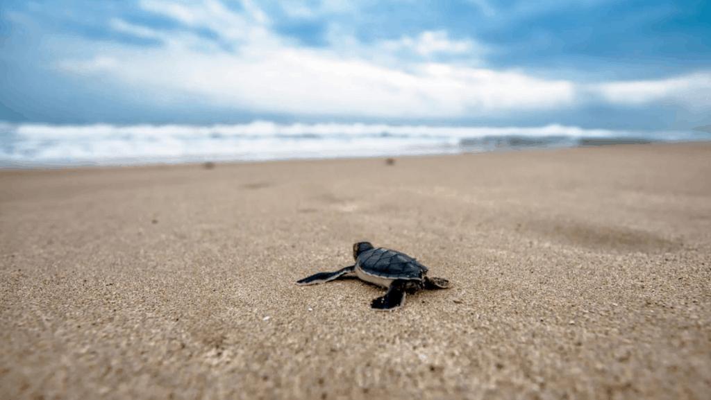 srilanka blog.png