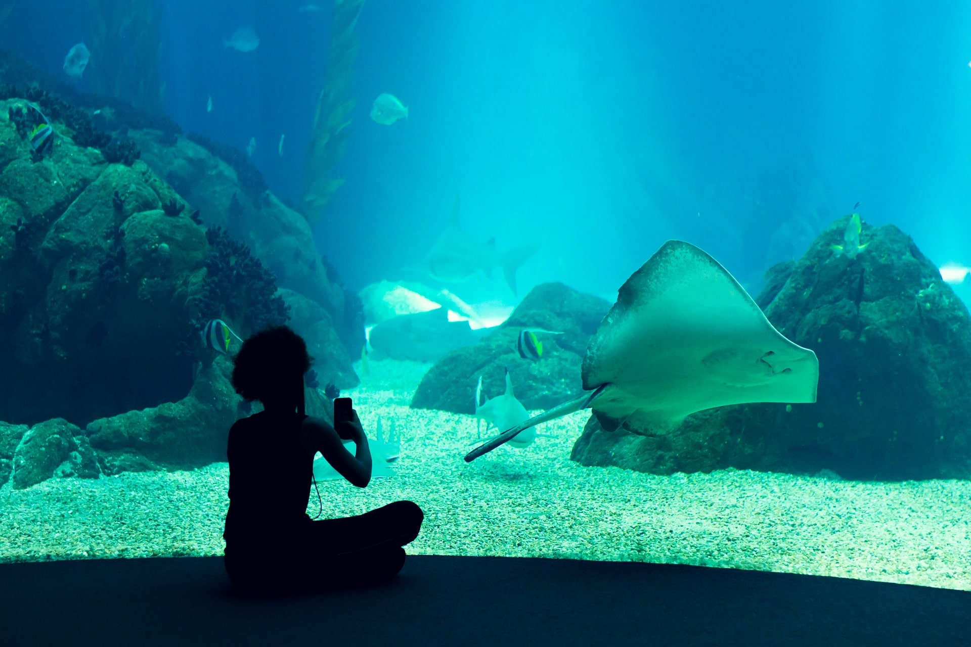 Visiting Lisbon's aquarium is an amazing thing to do in Portugal