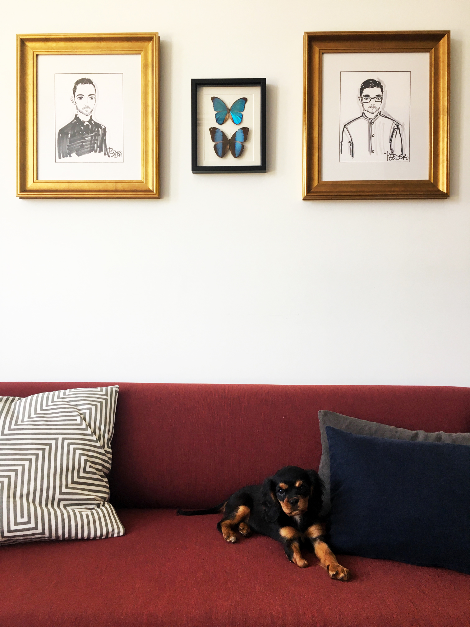 Portrait Sketched in classic gold frames above couch in living room with puppy and framed butterflies