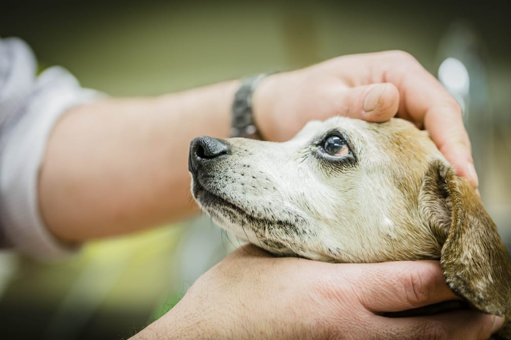 Image of 5 Pet Hospitals Every Philadelphia Pet Owner Should Know About