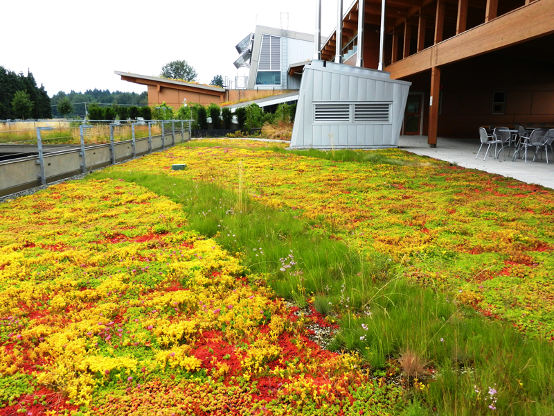 green roof duncan viu campus
