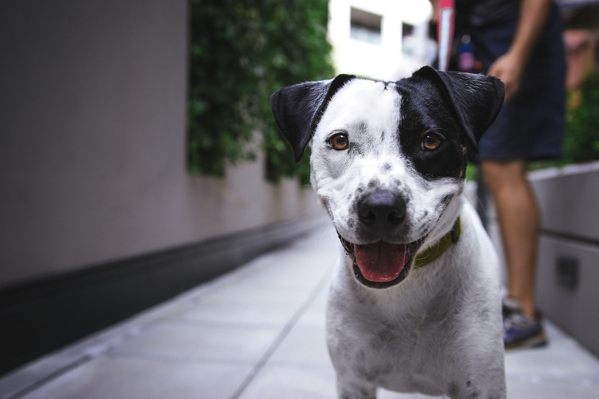 Image of 6 Places to Adopt Pets in San Francisco