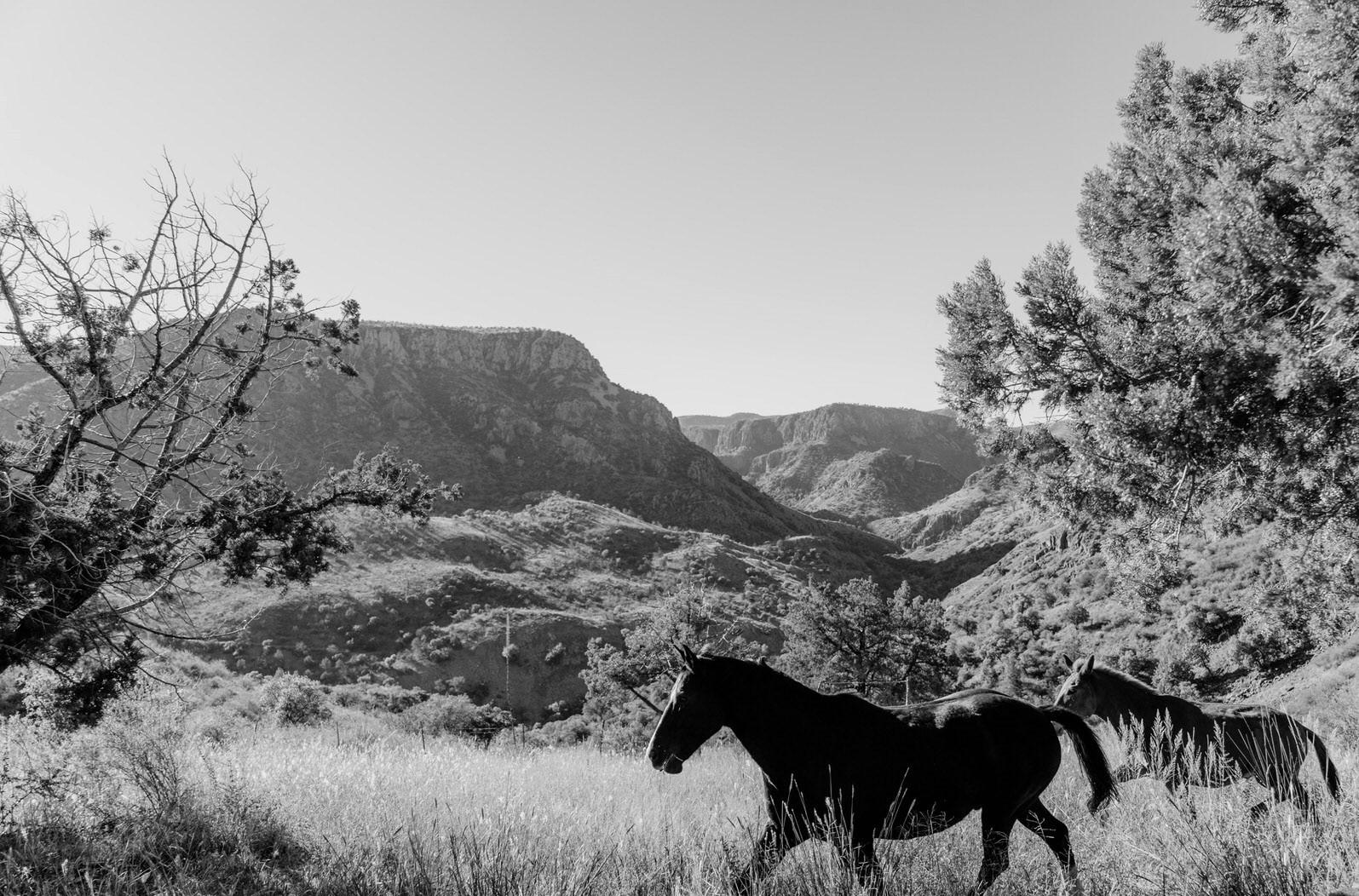 Horses Black and White.jpg