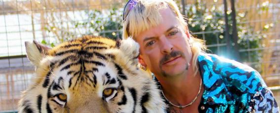 Tiger Owner