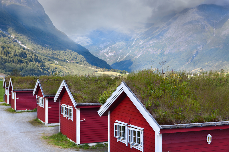 Norwegian houses with local vegetation on the green roofs