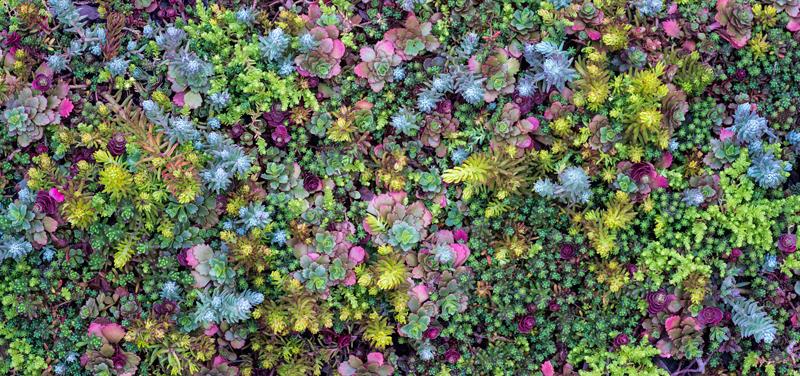 sedum purple roof diversity