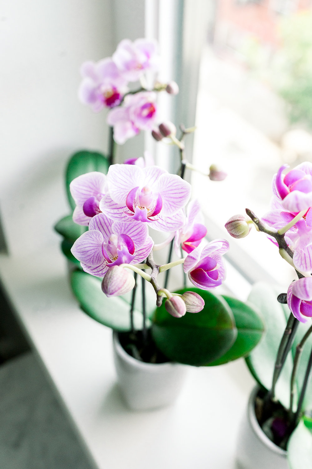 When do you send an orchid plant?