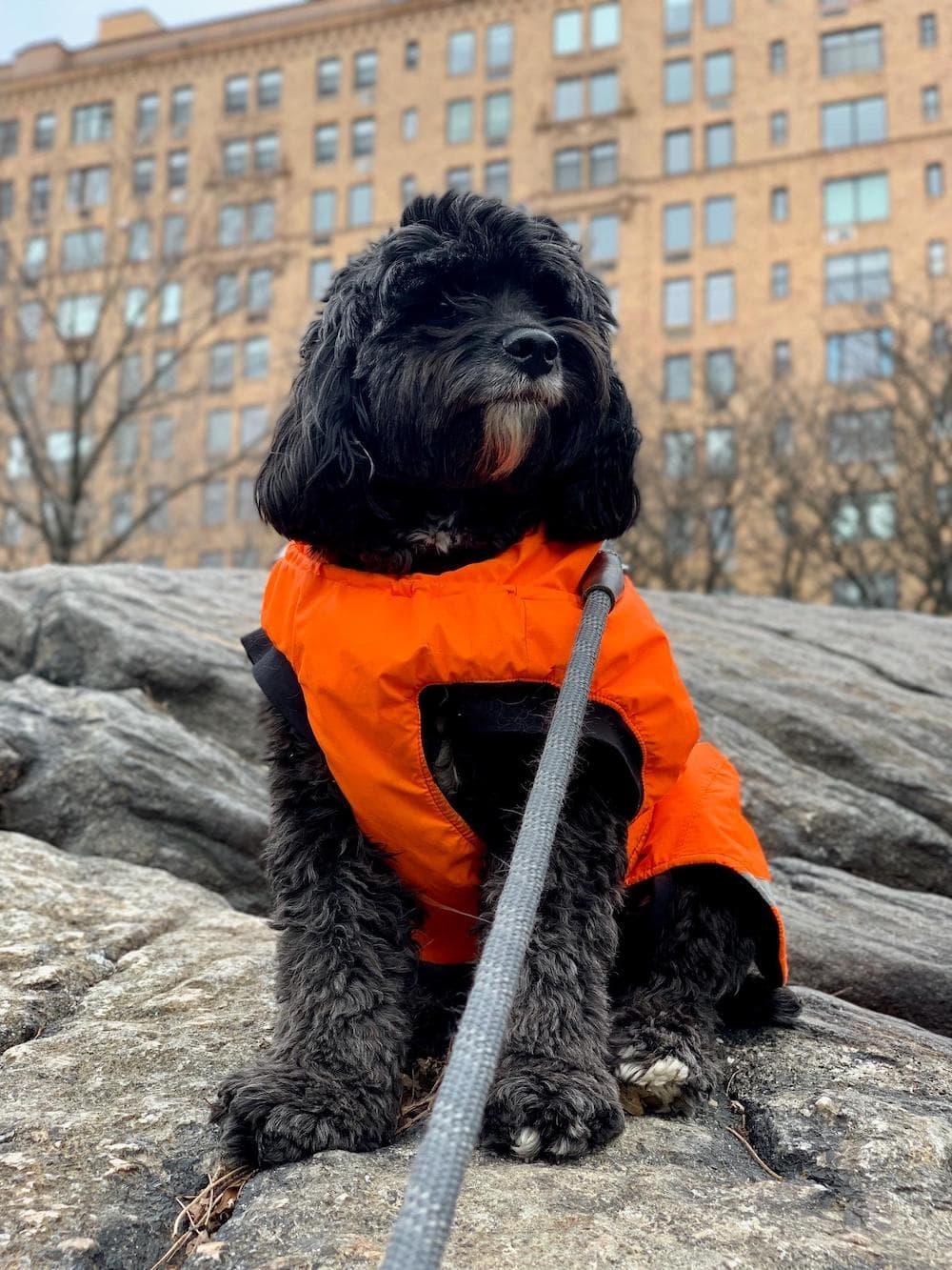 Jordy's Story: A Positive Change for Picky Pup with a Sensitive Stomach