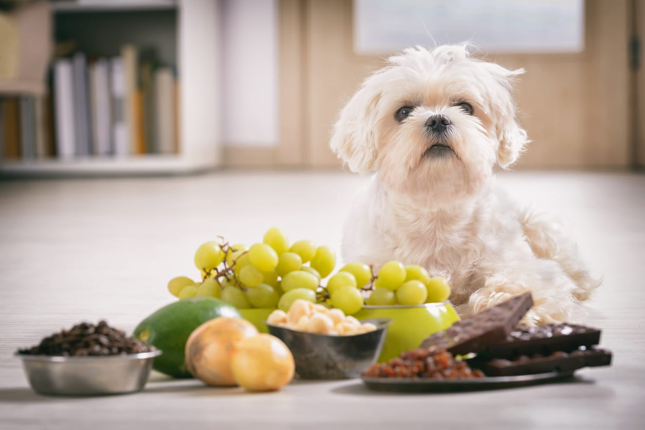 Dog Vomiting Causes and Treatment - NomNomNow