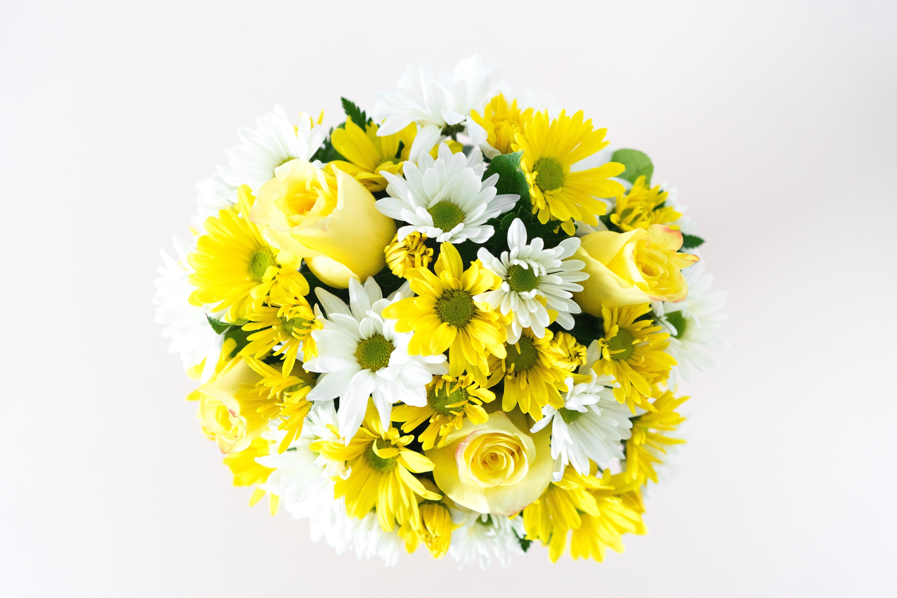 What are the Different Kinds of Daisies
