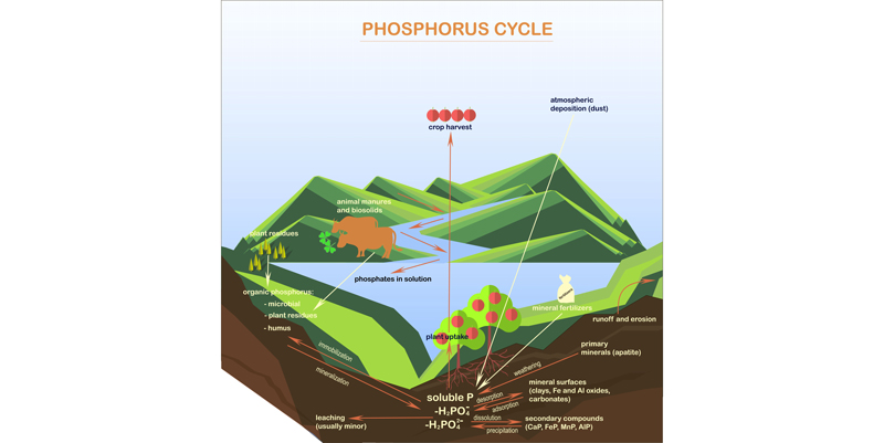 green roof plants - phosphorus cycle in natural systems