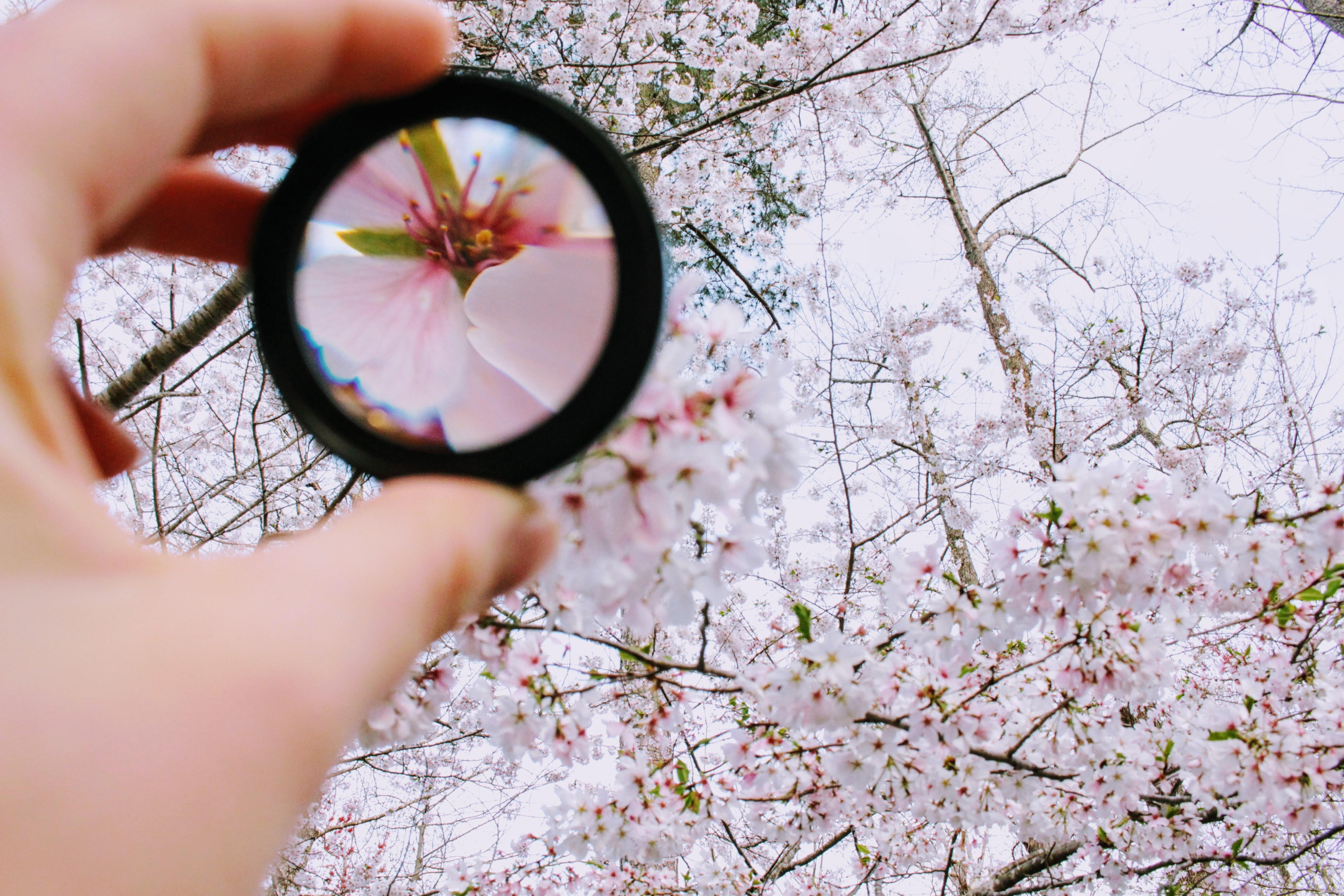 Lens focused on flowers