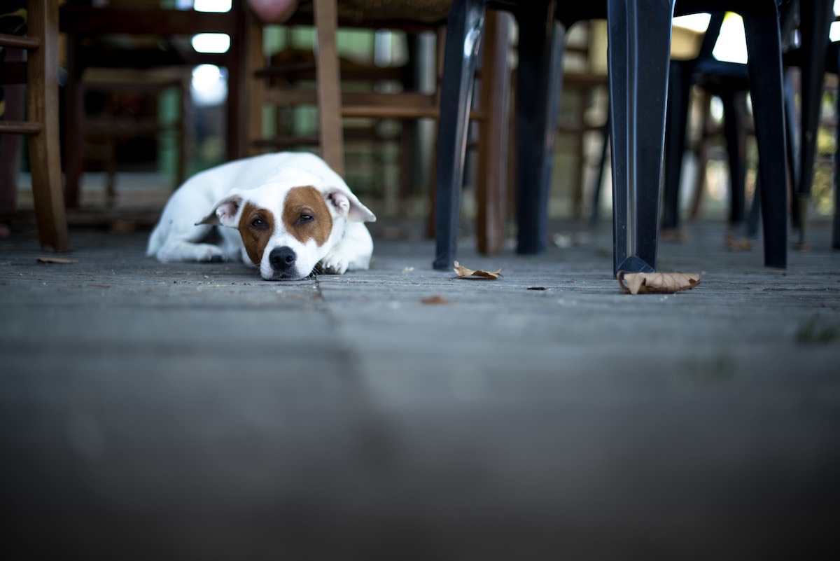 Image of Dog-Friendly Restaurants in San Francisco