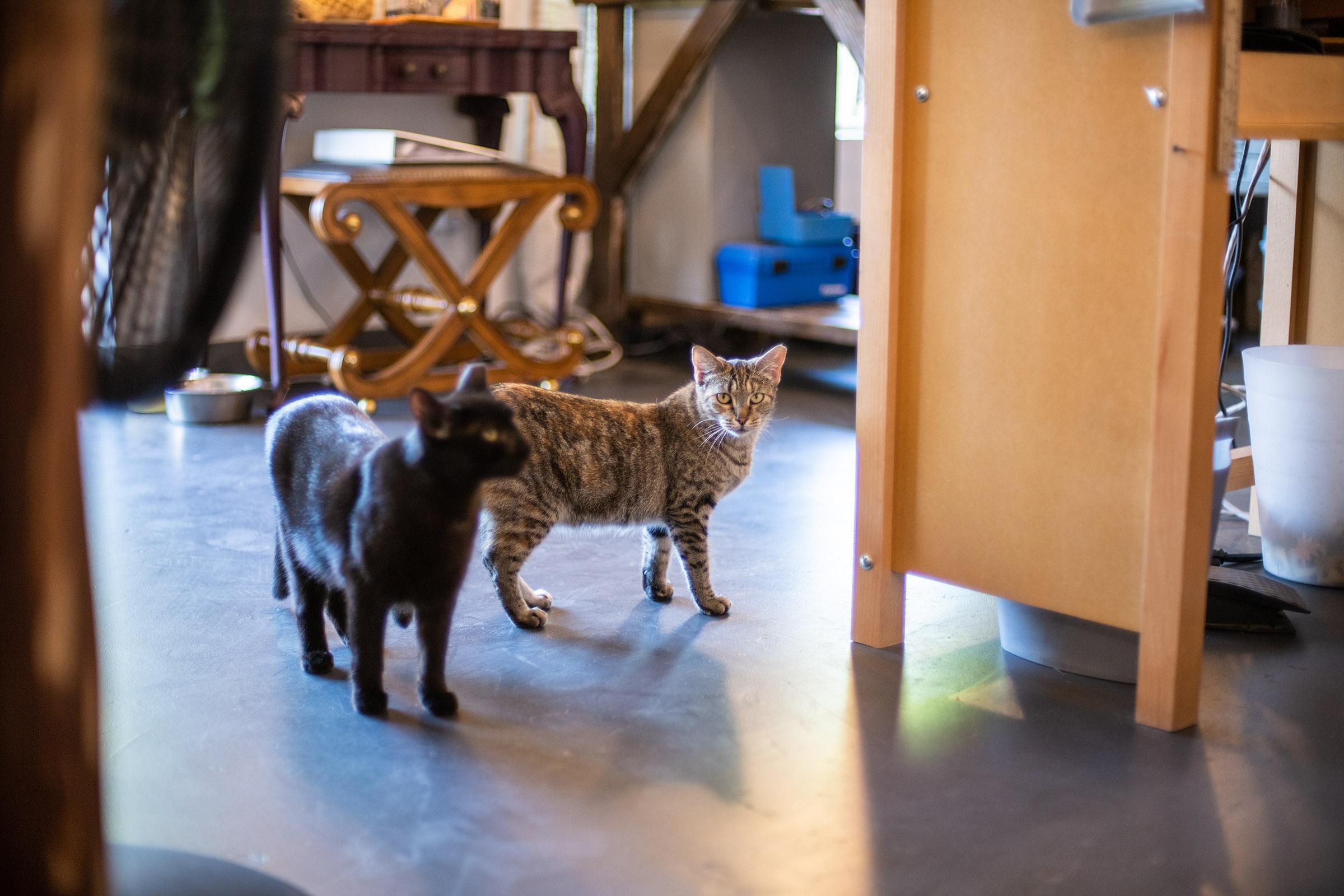 2 cats inside KP Studio