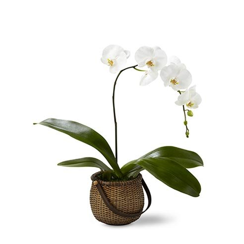 Should you send breakup flowers with white orchid plant