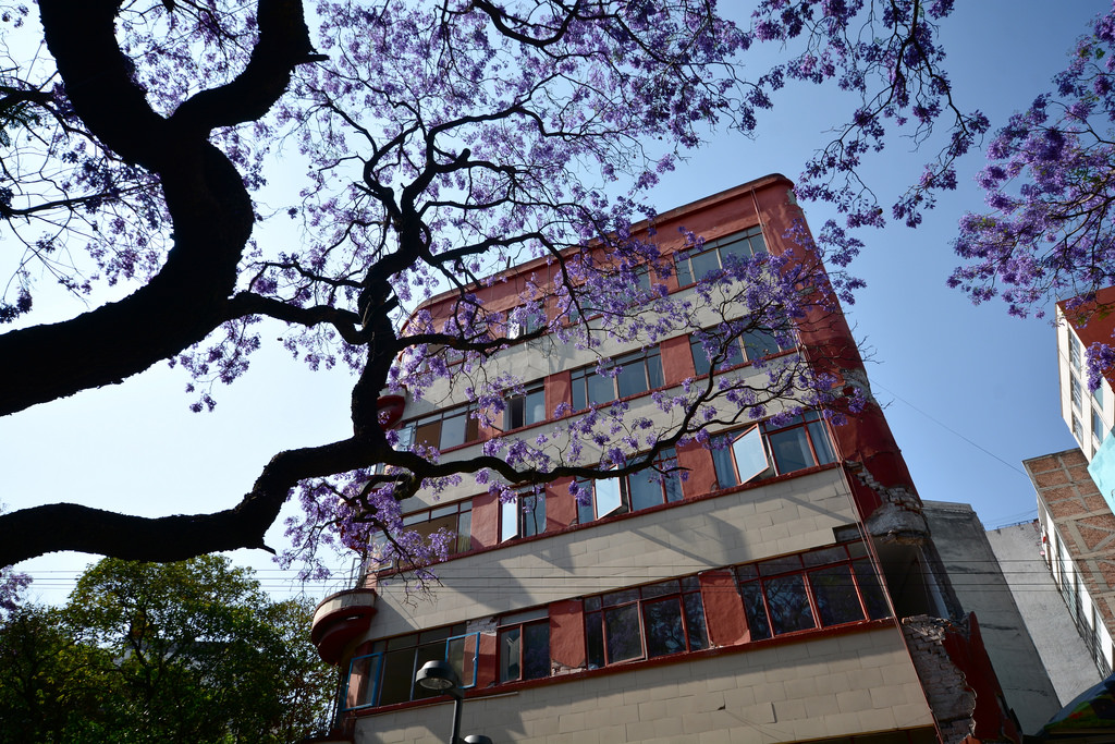 Condesa is one of the best neighborhoods in Mexico City