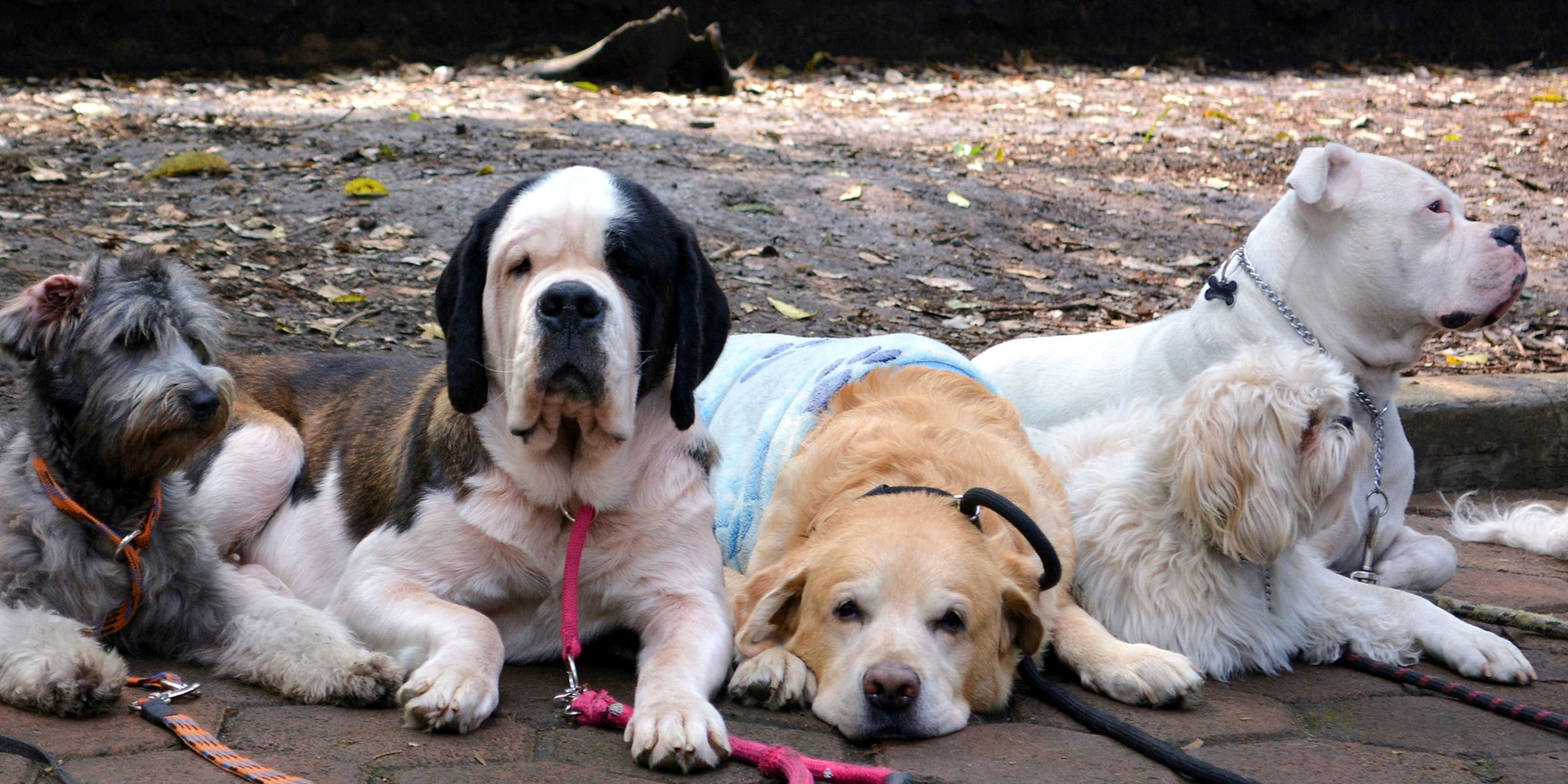 A fun thing to do in Condesa Mexico City is visit with the dogs of Parque Mexico