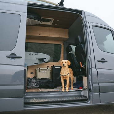 SOUNDBOKS in a van with a surfboard and puppy
