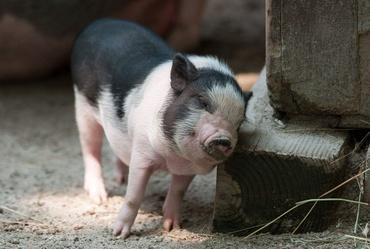 Hadoop ETL with Apache Pig