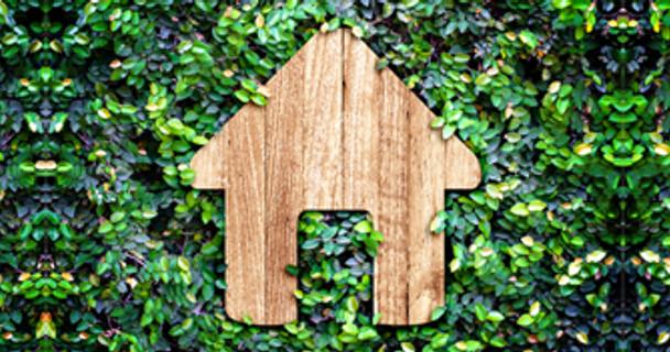 House-buying deal-breakers! Part 1 - invasive plants